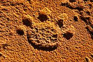 Rock art engraving of lion footprint, Twyfelfontein World Heritage Site, Uibasen Conservancy, Damaraland, Namibia