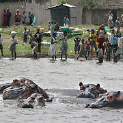 November 30, 2005 - A group of hippos water themselves while villagers go about their daily lives in Virunga National Park near Goma, in Eastern Congo. The hippo population has been decimated due to poaching by rebel soldiers hiding in the park since the beginning of Congo's civil war. Photo by Evelyn Hockstein