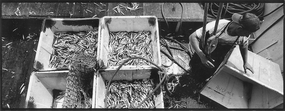 Pescatore italiano di sardine e alici pesca per il mercato francese<br /> <br /> Italian fisherman sardines and anchovies
