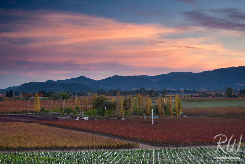 Fall Sunset, Napa Valley, California