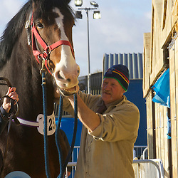 Mr B Lowrie's Upperfoot Sir Selwyn<br />