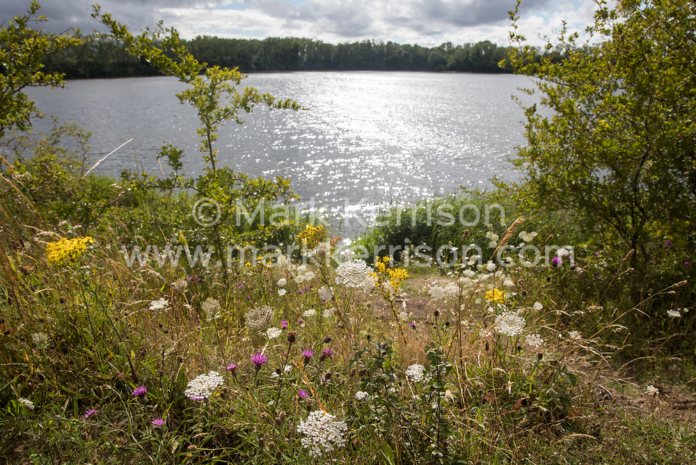 Wild flowers grow alongside the lake at Calvert Jubilee Nature Reserve on 27 July 2020 in Calvert, United Kingdom. On 22nd July, the Berks, Bucks and Oxon Wildlife Trust (BBOWT) reported that it had been informed of HS2's intention to take possession of part of Calvert Jubilee nature reserve, which is home to bittern, breeding tern and some of the UK's rarest butterflies, on 28th July to undertake unspecified clearance works in connection with the high-speed rail link.