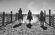 Cowboys Riding Through a Cattle Ranch in Ridgecrest California