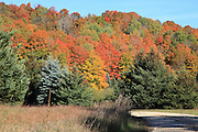 Glengary Hill, just north of Mesick, Michigan, is richly colored, and provides an amazing backdrop for the conifers and apple trees in the foreground.