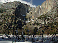 Cattails and Yosemite Falls in Winter, Yosemite National Park, California