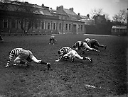 Irish Rugby Football Union, Ireland v Australia, Tour Match, Australian team and Irish team practice in College Park, Dublin, Ireland, Tuesday 14th January, 1958,.14.1.1958, 1.14.1958,..Irish Team, ..P J Berkery, Wearing number 15 Irish jersey, Full back, Landsdowne Rugby Football Club, Dublin, Ireland, and, London Irish Rugby Football Club, Surrey, England, ..A J F O'Reilly, Wearing number 14 Irish jersey, Right Wing, Old Belvedere Rugby Football Club, Dublin, Ireland, ..N J Henderson, Wearing number 13 Irish jersey, Captain of the Irish team, Right centre, N.I.F.C, Rugby Football Club, Belfast, Northern Ireland, ..D Hewitt, Wearing number 12 Irish jersey, Left centre, Queens University Rugby Football Club, Belfast, Northern Ireland,. .A C Pedlow, Wearing number 11 Irish jersey, Left wing, C I Y M S Rugby Football Club, Belfast, Northern Ireland, ..J W Kyle, Wearing number 10 Irish jersey, Stand Off, N.I.F.C, Rugby Football Club, Belfast, Northern Ireland, ..A A Mulligan, Wearing number 9 Irish jersey, Scrum Half, Cambridge University Rugby Football Club, Cambridge, England, and, London Irish Rugby Football Club, Surrey, England, ..B G M Wood, Wearing number 1 Irish jersey, Forward, Garryowen Rugby Football Club, Limerick, Ireland, ..R Dawson, Wearing number 2 Irish jersey, Forward, Wanderers Rugby Football Club, Dublin, Ireland, ..P J O'Donoghue, Wearing  Number 3 Irish jersey, Forward, Bective Rangers Rugby Football Club, Dublin, Ireland,  ..W A Mulcahy, Wearing number 4 Irish jersey, Forward, University College Dublin Rugby Football Club, Dublin, Ireland,..J B Stevenson, Wearing number 5 Irish jersey, Forward, Instonians Rugby Football Club, Belfast, Northern Ireland,..J A Donaldson, Wearing number 6 Irish jersey, Forward, Collegians Rugby Football Club, Belfast, Northern Ireland,..J R Kavanagh, Wearing number 7 Irish jersey, Forward, Wanderers Rugby Football Club, Dublin, Ireland, ..N Murphy, Wearing number 8 Irish jersey, Forward, Cork Constitution Rugby Footb