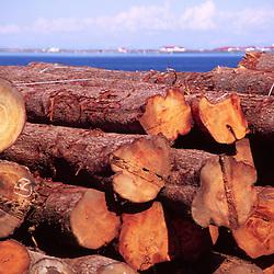 Logs Bound for Sale, Port Angeles, Washington, US