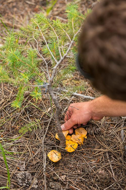mushroom forage mushroom forage class