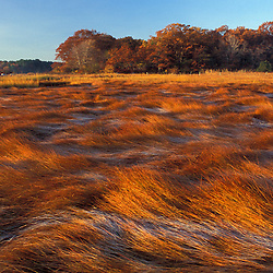 "Frost on grasses in a New Hampshire salt marsh. Tidal marsh.  ""Massacre Marsh.""  New Hampshire Seacoast.  Fall. Rye, NH"