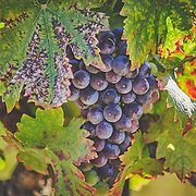 Winery Images to Print