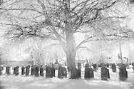 Nederland, Vught, 20140416.<br /> Op het Zorgpark Voorburg van Reinier van Arkel in Vught. Begraafplaats op het terrein. Oude boom beschermt de graven<br /> Infrarood foto.<br /> Het gras en de bladeren zijn wit gekleurd door het infrarood effect. Het jonge groen bevat veel chlorofyl dat het infrarode licht sterk weerkaatst. En daardoor wit lijkt op de foto.<br /> <br /> Netherlands, Boxtel, 20,140,409. <br /> At the Care Park Voorburg Reinier van Arkel in Vught. <br /> Local cemetry.<br /> Infrared photo<br /> The grass and the leaves are colored white by the infrared effect. Young green leaves containerization a lot of chlorophyll That reflects the infrared light strongly. Therefore and appears white in the picture.