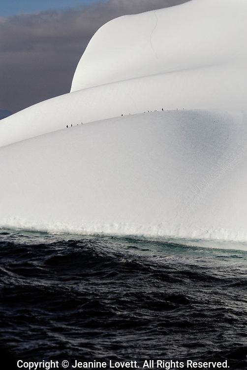 An Antarctica iceberg with three rounded levels holds penguins in first level high above the breaking waves.