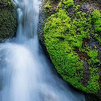 Revelstoke National Park, British Columbia, Canada