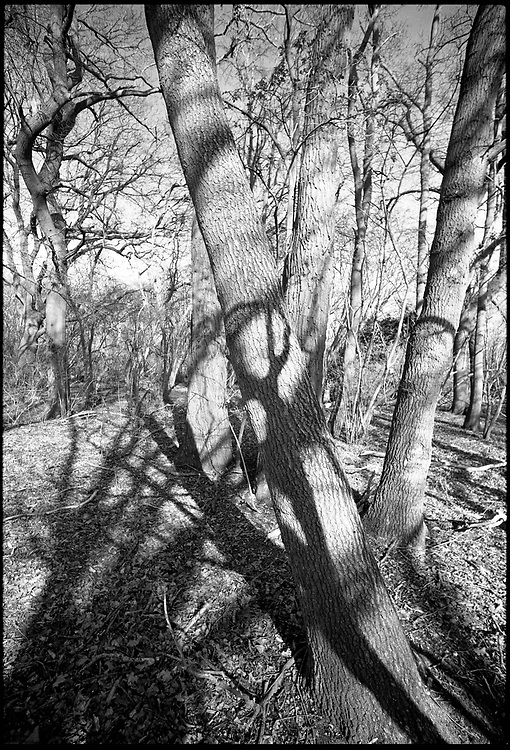 Black & White Silver Gelatin Fibre Print<br /> Signed Limited Edition Original