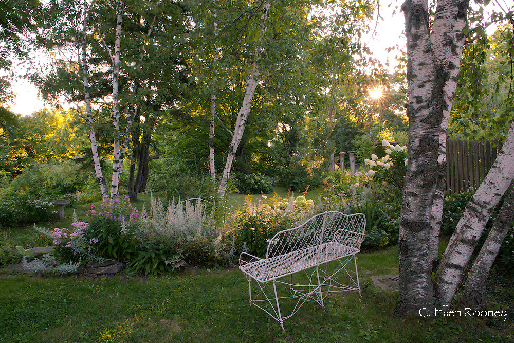 Birch trees, Phlox, Hydrangea, and Golden rod next to vintage garden furniture in Katherine Bowling's garden in Potter Hollow, New York State, U.S.A.
