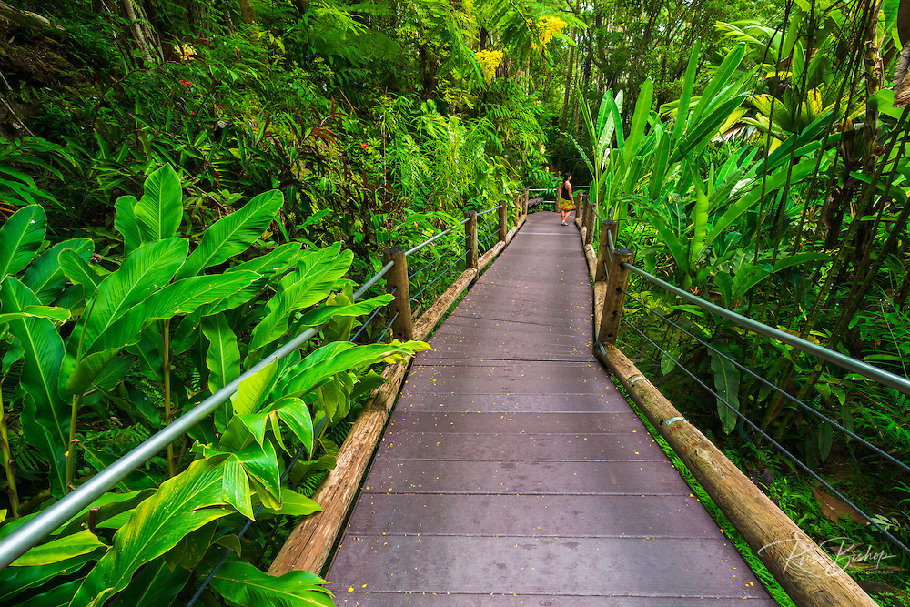 Trail at the Hawaii Tropical Botanical Garden, Hamakua Coast, The Big Island, Hawaii USA