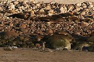 16: SEA CORTEZ SEALS & DOLPHINS