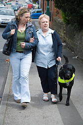 Visually impaired woman walking with her friend and guide dog,