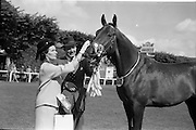 08/08/1962<br /> 08/08/1962<br /> 08 August 1962<br /> Dublin Horse Show at the RDS, Ballsbridge, Wednesday. <br /> Picture shows &quot;Hypur&quot; a 3 year old gelding owned by Mrs E.M.R. O'Driscoll, Belvedere Stud, Donaghadee, Co. Down, winner of the Anthony Maude Cup, for the best 3 year old gelding of the Dublin Horse Show with Mr and Mrs O'Driscoll.