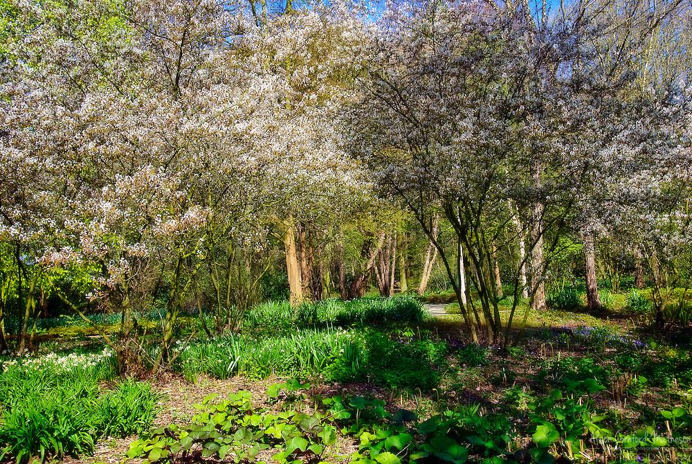 Kasteeltuinen Arcen Gardens Gate near Venlo in Limburg Province, The Netherlands The Woodland Theme Garden at Arcen Gardens