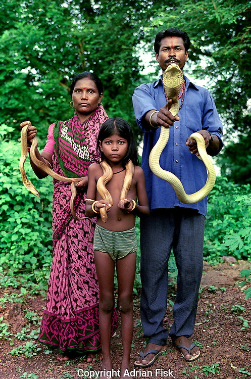 The village of Padmakesharpur in the state of Orissa in East India is probably the largest community of snake charmers anywhere in the world. 200 charmers live in the village, but each year they find it harder to make a living from charming and their numbers are slowly diminshing. .The Das family can be seen, Khageswar and his wife Basanti and their seven year old daughter Sunati.