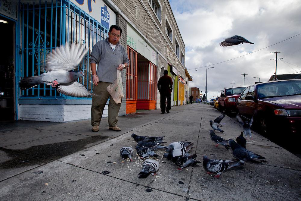 A shop vendor feeds his pigeons. Jan. 29, 2011. Los Angeles, Calif. (photo by Gabriel Romero ©2011)