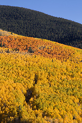 Beautiful photograph of leaves changing color in Santa Fe Mountains in New Mexico