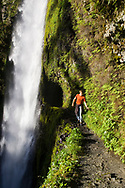 A young man, holds onto a safety cable and walks along the edge of a cliff at Tunnel Falls on Eagle Creek trail in the Columbia River Gorge, Oregon, USA. Tunnel Falls received its name due to a tunnel being cut from the bedrock behind the falls so that hikers and trail runners can pass further up the gorge.  The trail becomes very narrow during this section and it is necessary to hold onto a safety cable. (Model Released)