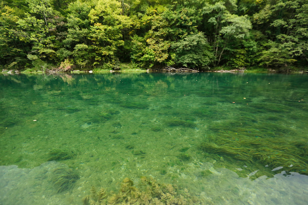 Aquatic plants and clean water of Una river, Una National Park, Bosnia and Herzegovina.