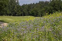 HALWEG / AMSTERDAM  — wilde bloemen met insecten, geo, Amsterdamse Golf Club (AGC) COPYRIGHT KOEN SUYK