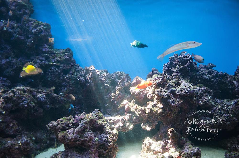 Tropical coral reef with sunbeam and fish, Waikiki Aquarium, Oahu, Hawaii