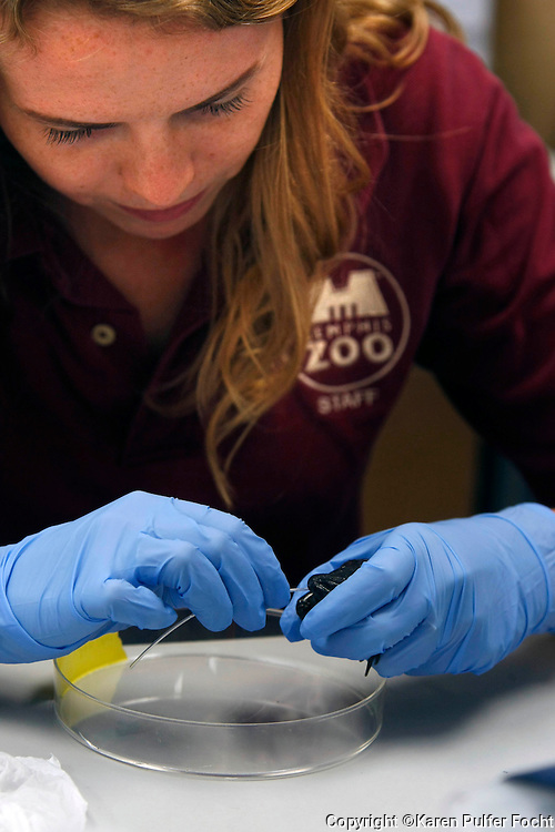 The Memphis Zoo is attempting to cryopreserve sperm from some very rare animals before they become too old to reproduce, specifically the Dusky Gopher frogs.