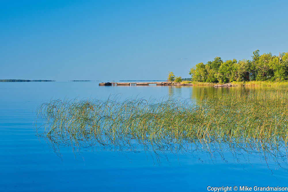 Reeds on Lake of the Woods <br />