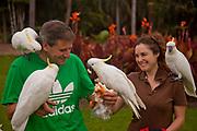 Sulphur crested cockatoos befriend visitors to Royal Botanic Garden, Sydney, NSW, Australia