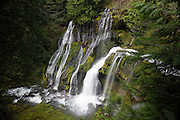 Panther Creek Falls, located in Skamania County, Washington, drops 136 feet (41 meters) in several tiers. Panther Creek is fed by several creeks that begin on peaks in the Gifford Pinchot National Forest and ultimately empties into the Wind River.