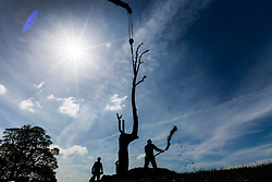 © Licensed to London News Pictures. 03/05/2018. Wakefield UK. A 24-tonne Sculpture by artist Giuseppe Penone called A Tree in the Wood is being lifted into place this morning at Yorkshire Sculpture Park near Wakefield. Penone is staging his extensive new exhibition at the park with works drawn from the past five decades of Penone's career, including many never shown in the UK. Photo credit: Andrew McCaren/LNP