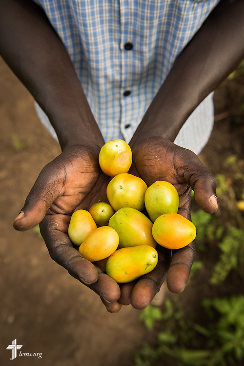A man holds fresh produce for a portrait from a vegetable garden on Wednesday, Sept. 23, 2015, at the Leitchour Refugee Camp outside Gambela, Ethiopia. LCMS Communications/Erik M. Lunsford
