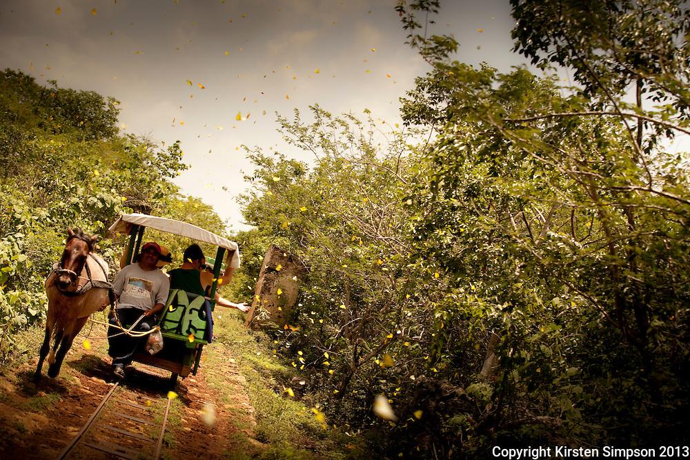 Transport to the Cenotes near Merida
