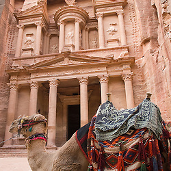 A camel resting in front  of the Treasury. Petra, jordan, Asia.