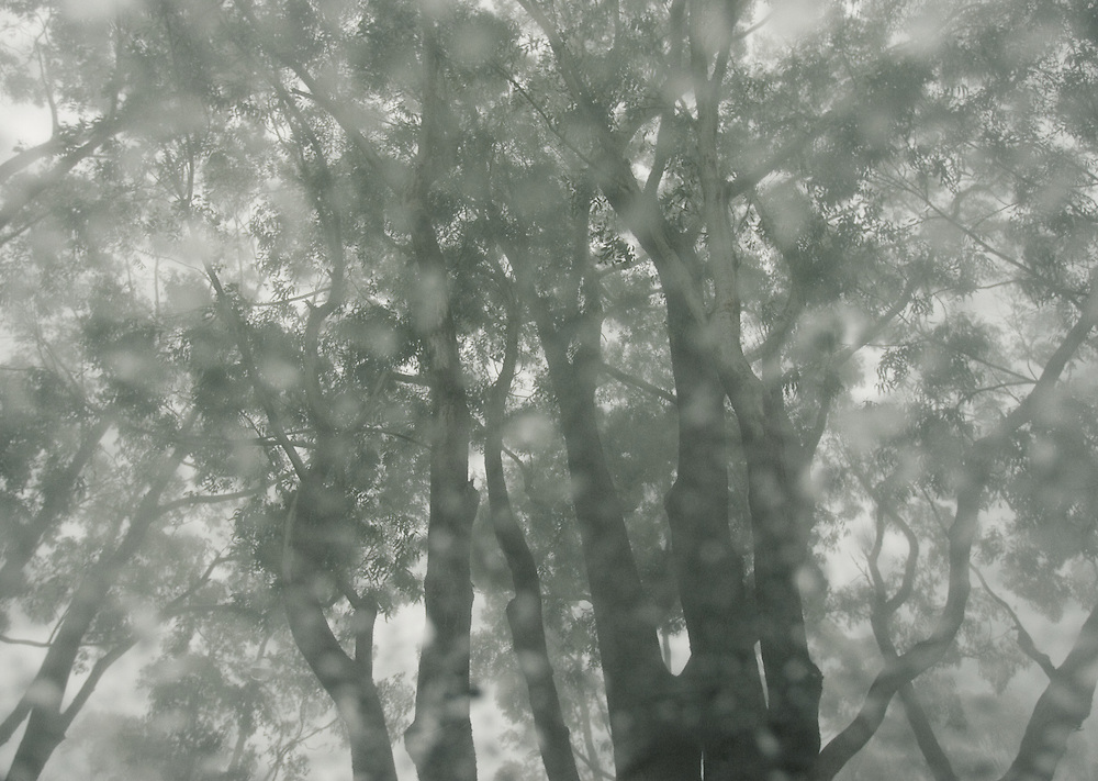 trees in the rain photographed through a car windscreen at Laurieton on the NSW mid North coast of Australia.