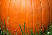 10/22/2004 - Somerville NJ - Minimalist Fall concept. Halloween. Pumpkin in the yard.