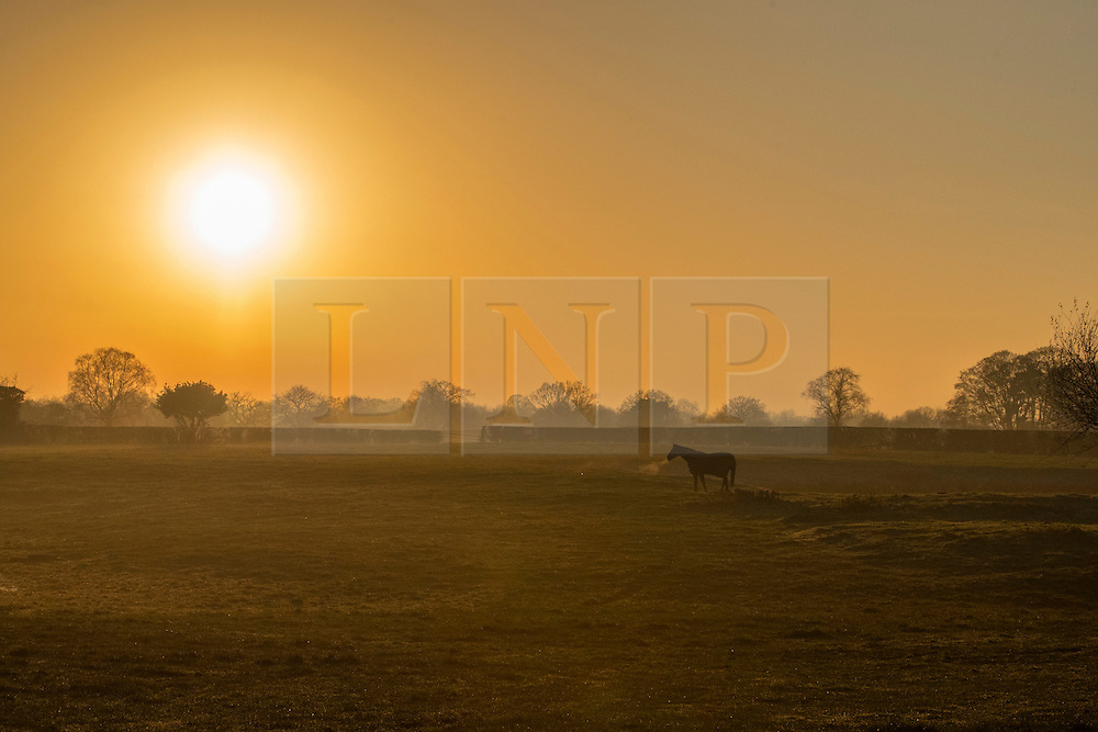 © Licensed to London News Pictures. 28/12/2014. Cheshire, UK A horse stands in a frosty field. Sunset over the Cheshire Countryside today 28th December 2014. Photo credit : Stephen Simpson/LNP