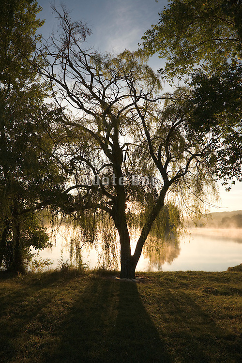 trees in morning fog on the edge of water