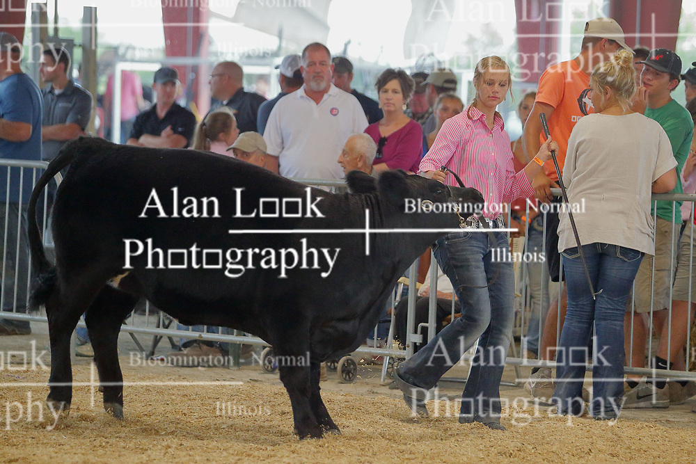 03 August 2017:  Kellie Jones shows her cow at 2017 McLean County Fair<br /> <br /> #alphoto513