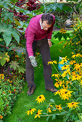 Applying lawn sand to a lawn to feed, improve drainage and prevent moss