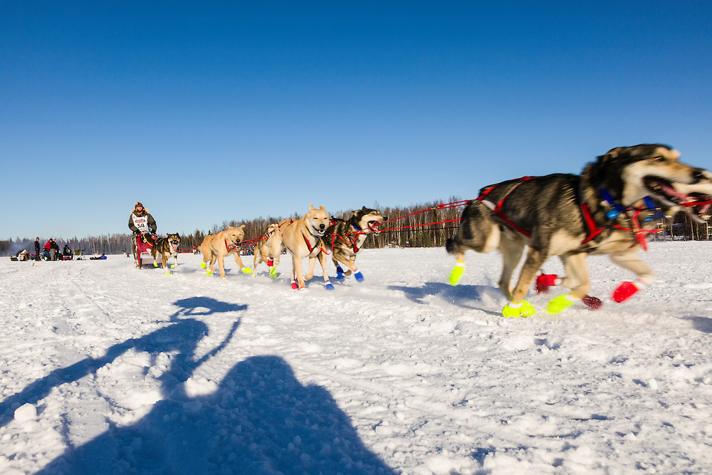 Musher Marcelle Fressineau competing in the 42nd Iditarod Trail Sled Dog Race on Long Lake after leaving the restart on Willow Lake in Southcentral Alaska.  Afternoon. Winter.