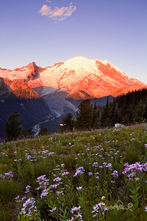 Sunrise on Mt Rainier with summer wildflowers