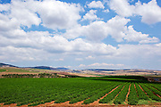 Israel, Jezreel valley, agricultural fields with crops, Northern Israel