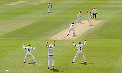 Somerset's Tim Groenewald celebrates the LBW wicket of Nottinghamshire's Riki Wessels. - Photo mandatory by-line: Harry Trump/JMP - Mobile: 07966 386802 - 16/06/15 - SPORT - CRICKET - LVCC County Championship - Division One - Day Three - Somerset v Nottinghamshire - The County Ground, Taunton, England.