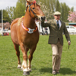 Notts County Show 2013  Suffolk Punch